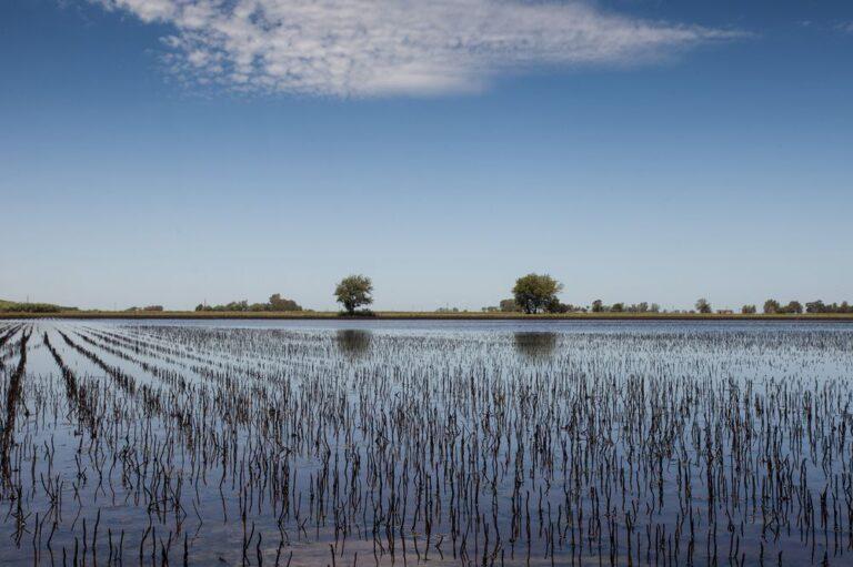Argentina Sets CO2 Emissions Target
